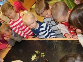 Observation des escargots